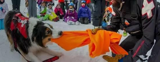 不是选装备,也不是查攻略,出来滑雪最应该注意的首要问题竟是它!