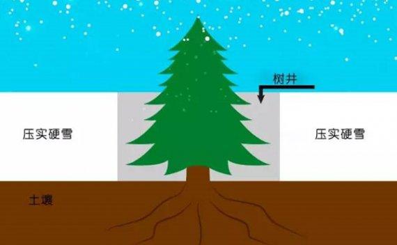 20%的滑雪死亡都源于树井,你知道怎么逃生么?
