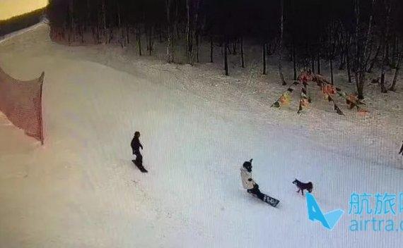 竟然有人在雪道上遛起了狗,引发了事故,还逃逸?!